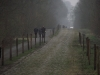 05 - 06.04.2012 - Aspettando la Paris - Roubaix